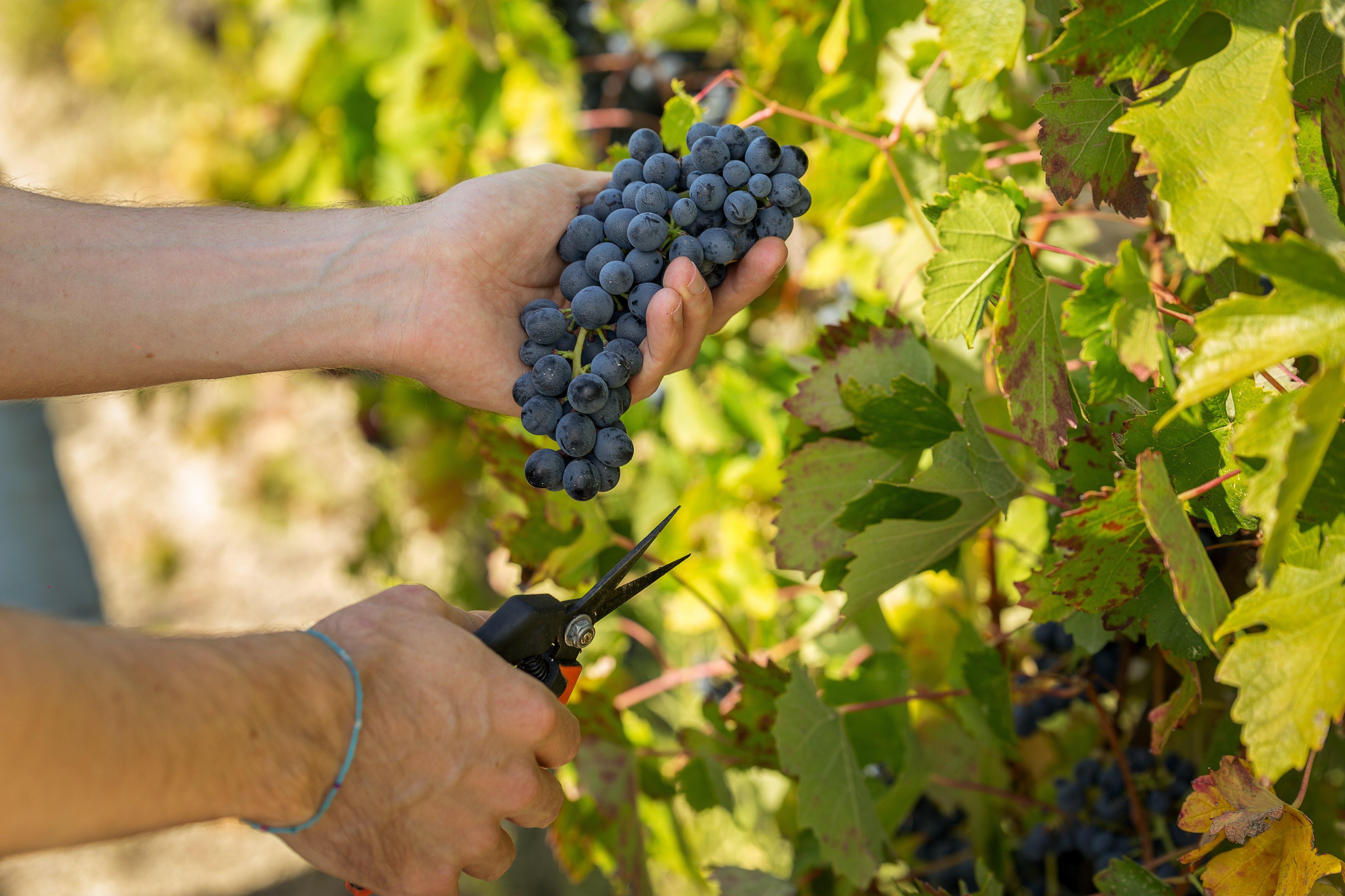 Divinea wine experiences and wine tasting