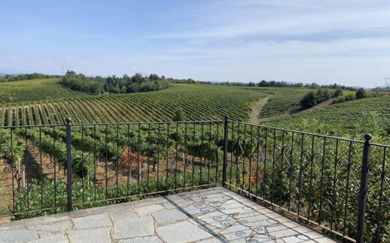 esperienze da fare in coppia: wine trekking tra i vigneti