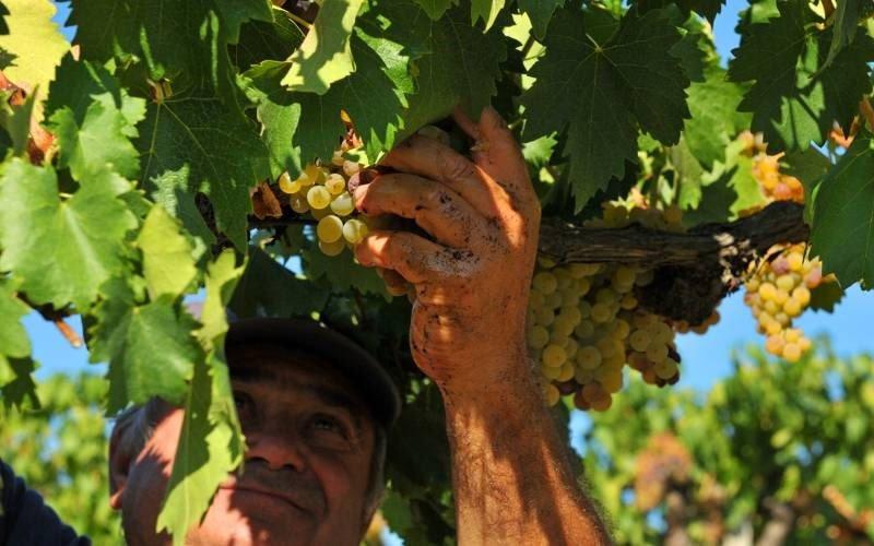 regalare un'esperienza di degustazione vini in vigna
