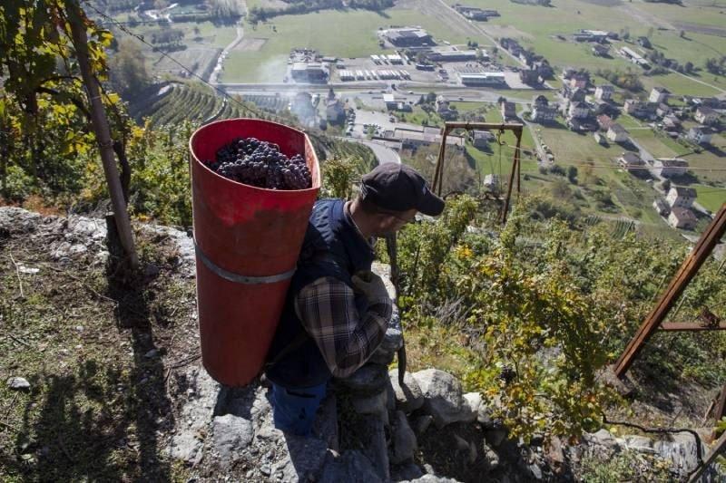 una degustazione scoprendo la viticoltura eroica della valtellina