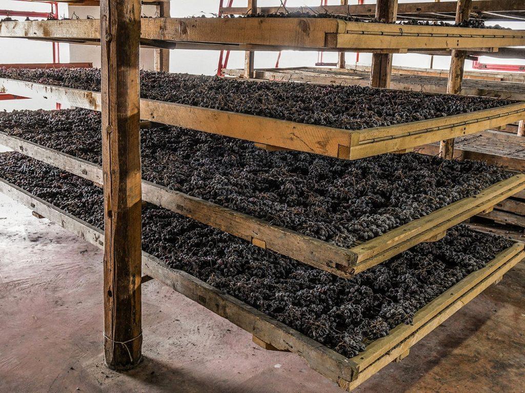 uve della cantina mizzon in appassimento